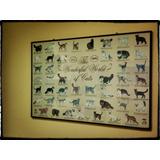 Afiche De Razas De Gatos, Solo El Afiche