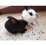 Mascotas Conejas Grandes