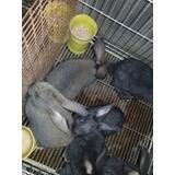 Guia  Pdf Para Conejos