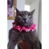 Collares Para Gatitos Y Perritos, Bandanas