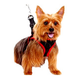 Harness Correa Para Perros Pechera Mascotas Pequeño 15.5-19p
