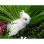 Conejos Como De Peluche