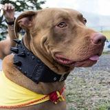 Collar Para Perro Con Puas Creaciones Bull