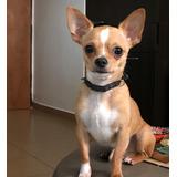 Busco Novia Chihuahua En Valencia