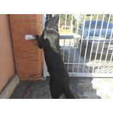Dosis Vacun Anual De Rabia Cachorro Perros