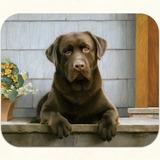 Mouse Pad Labrador Retriever Chocolate 23,5 X 20 Cms X 2 Und