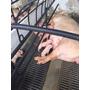 Piso Plastico Para Cerdo (lechones)