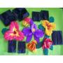 Troquel Molde Termoformado Flores Paraorquideas Tela Y Foami