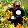Pdf - Todo Sobre Plantas Medicinales Parte 2