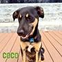 Perros En Adopción. Caracas. Esterilizados Y Vacunados.