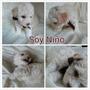 Cachorros Poodle Toy
