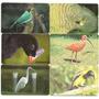 Serie Aves De Venezuela