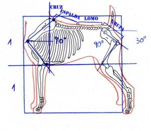 Curso De Peluqueria Canina Comercial Nivel Basico