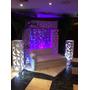Alquiler De Palmeras, Minijardines, Areas Lounge Festejos
