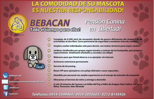 Hotel Y Pensión Canina En Libertad Club De Campo 5 Estrellas