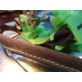 Guia Sesgo, Pie Prensatelas,maquina De Coser(domestica),1cm