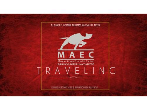 Maec Tramites,permisos De Viaje Para Perros Y Gatos