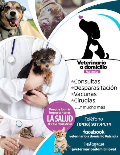 Medico Veterinario A Domicilio