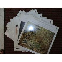 Coleccion Completa De 48 Lp De Acetato Nuevos