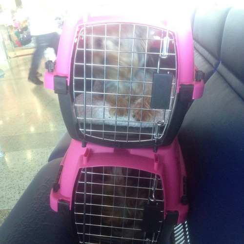 Servicios Veterinarios - Viajes Internacionales De Mascotas