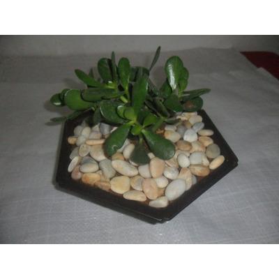 Piedras blancas decorativas para jardines bs for Bolsa de piedras decorativas